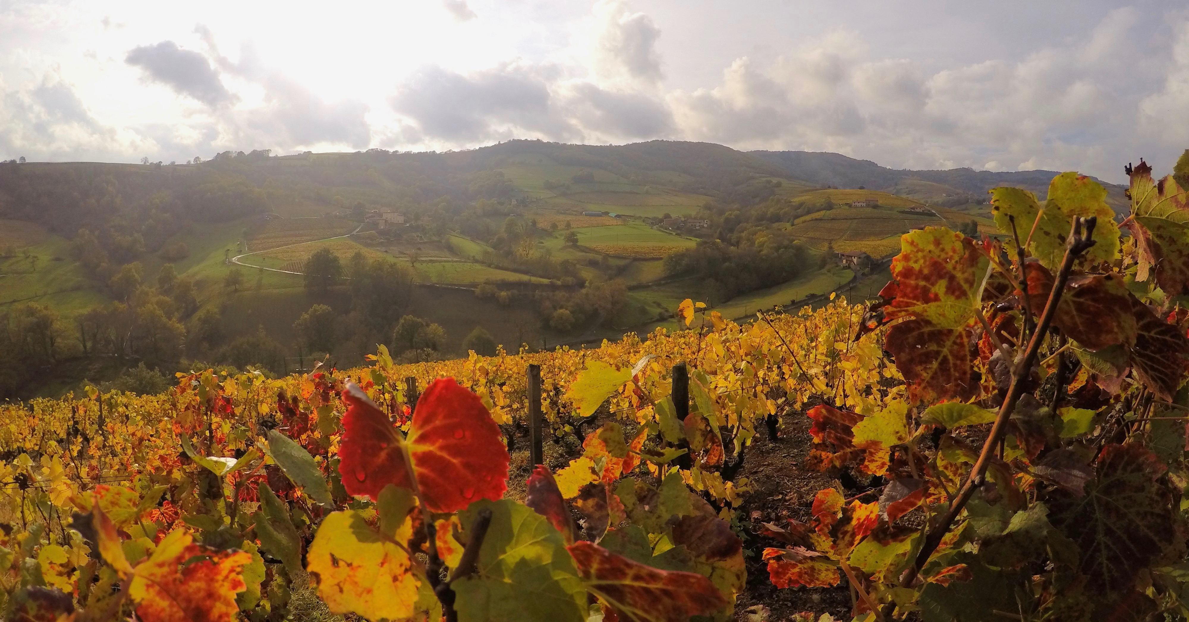 Wine stay in the Beaujolais - Beaujolais - Wines Region - 1
