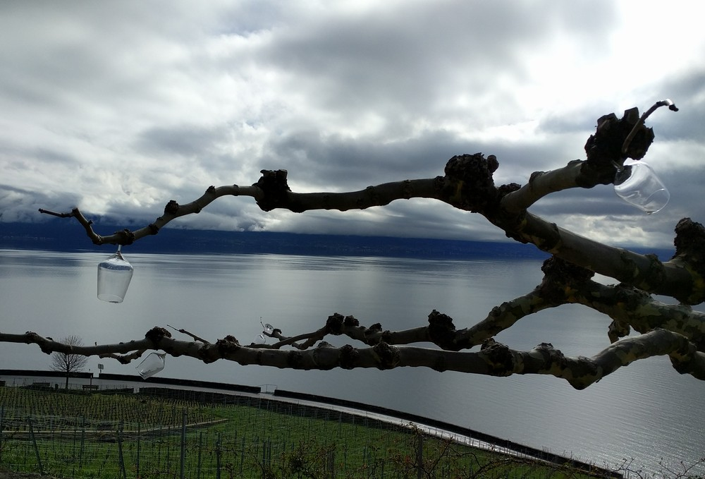 Wine Stay in Switzerland - Switzerland - Wine Regions - 2