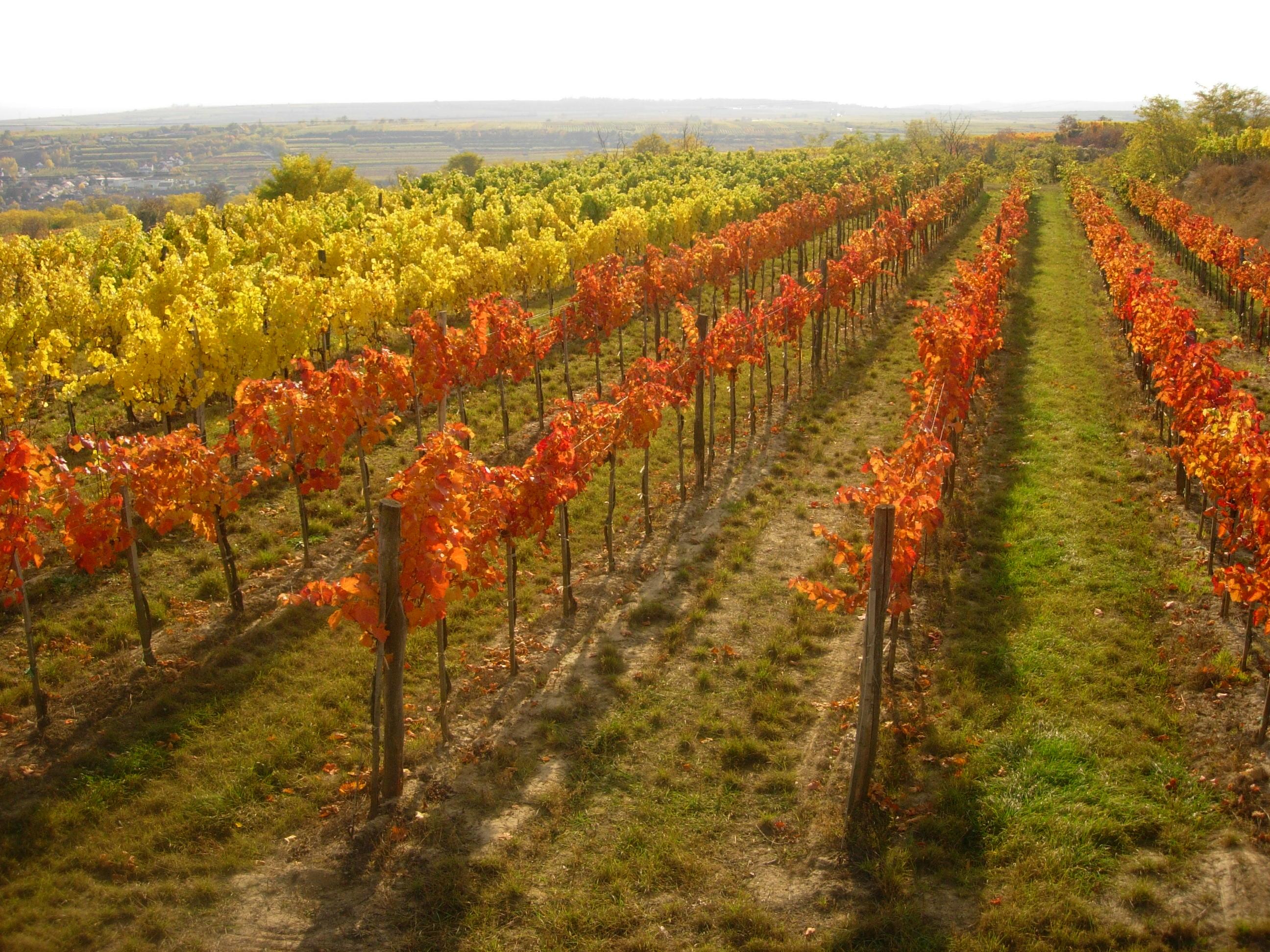 SÉJOUR OENOLOGIQUE EN AUTRICHE - Autriche - Les régions viticoles - 2