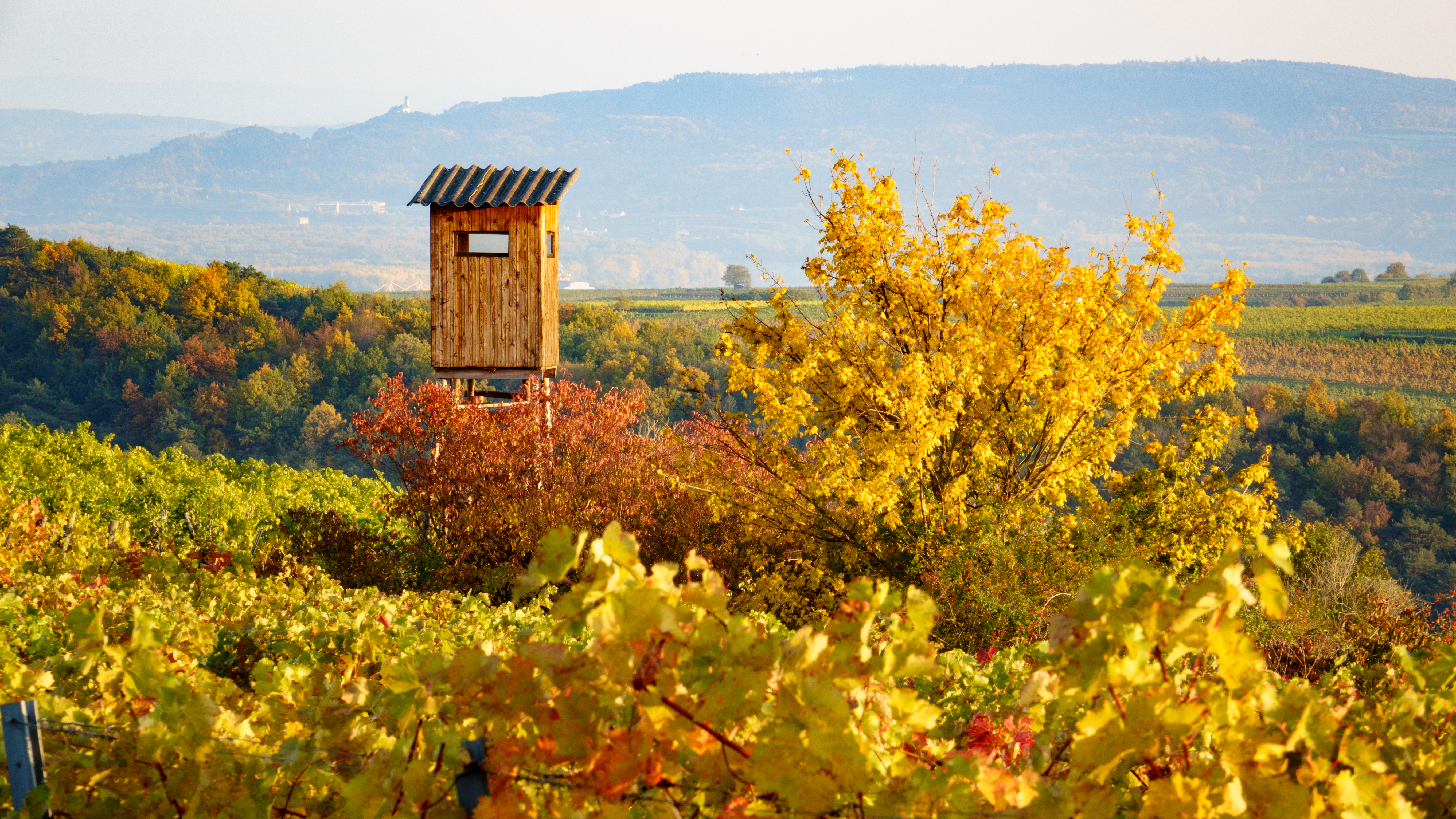 SÉJOUR OENOLOGIQUE EN AUTRICHE - Autriche - Les régions viticoles - 1