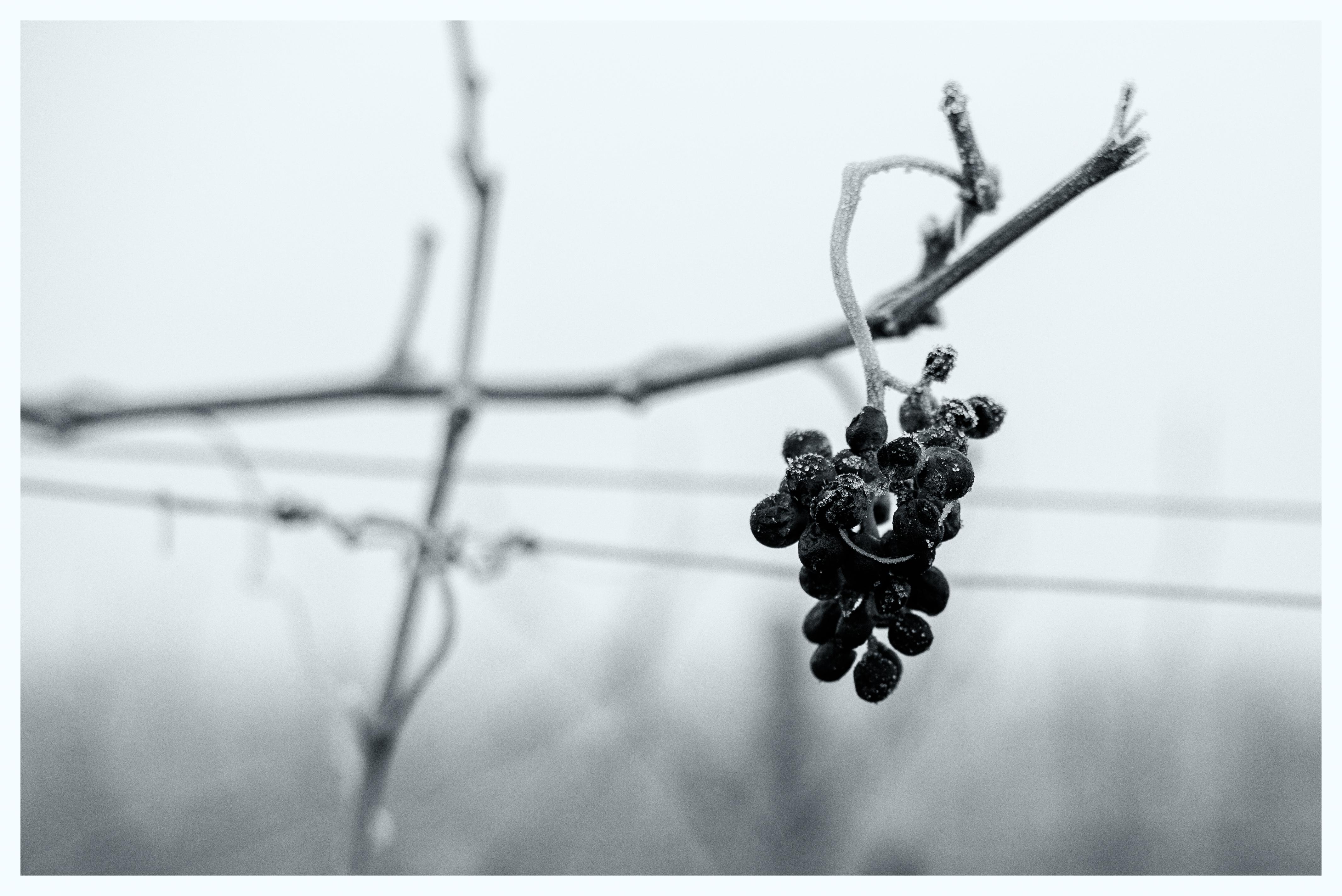 Wine stay in Germany - Germany - Wine regions - 3