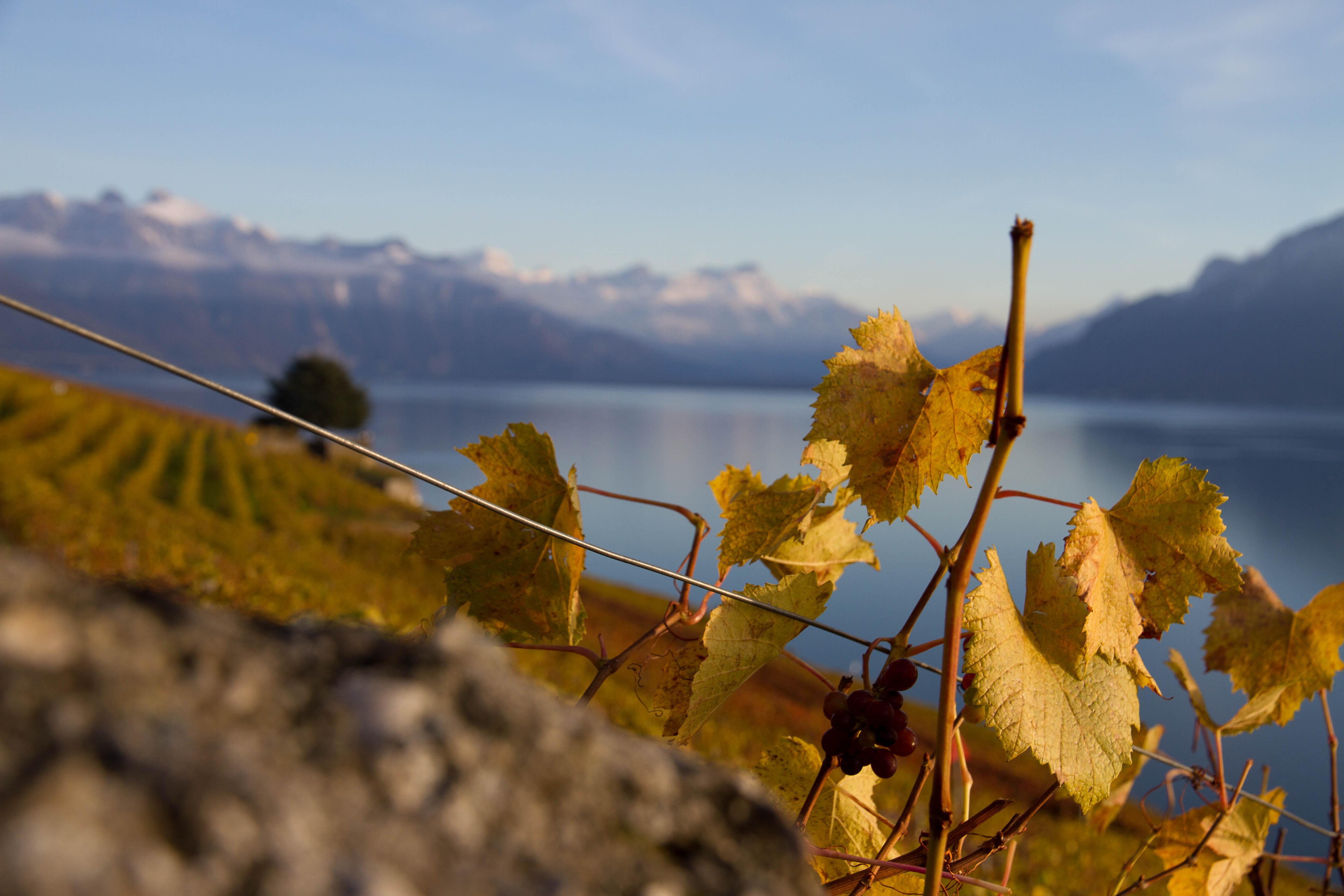 Wine Stay in Switzerland - Switzerland - Wine Regions - 1