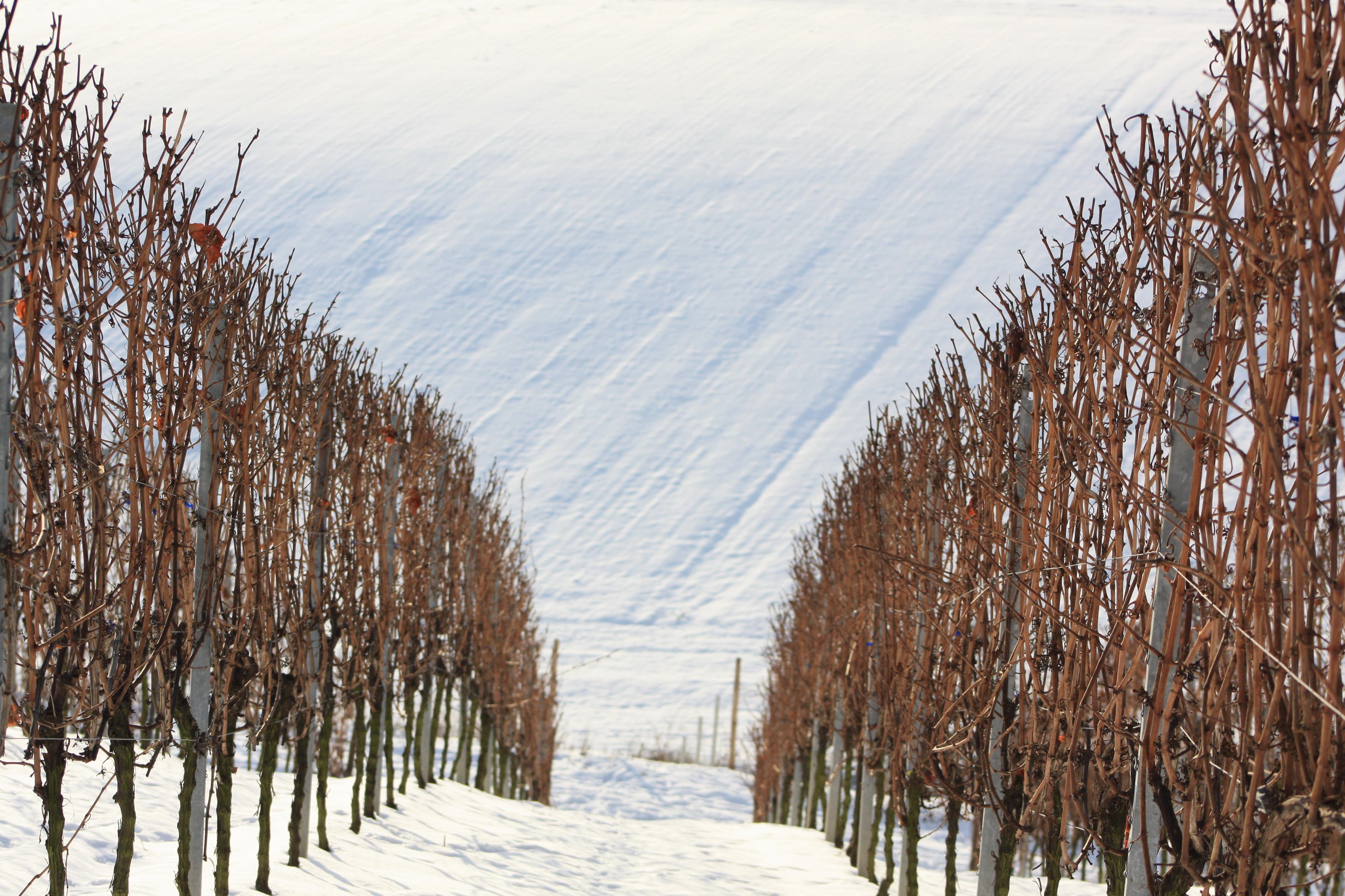 Wine stay in Germany - Germany - Wine regions - 2