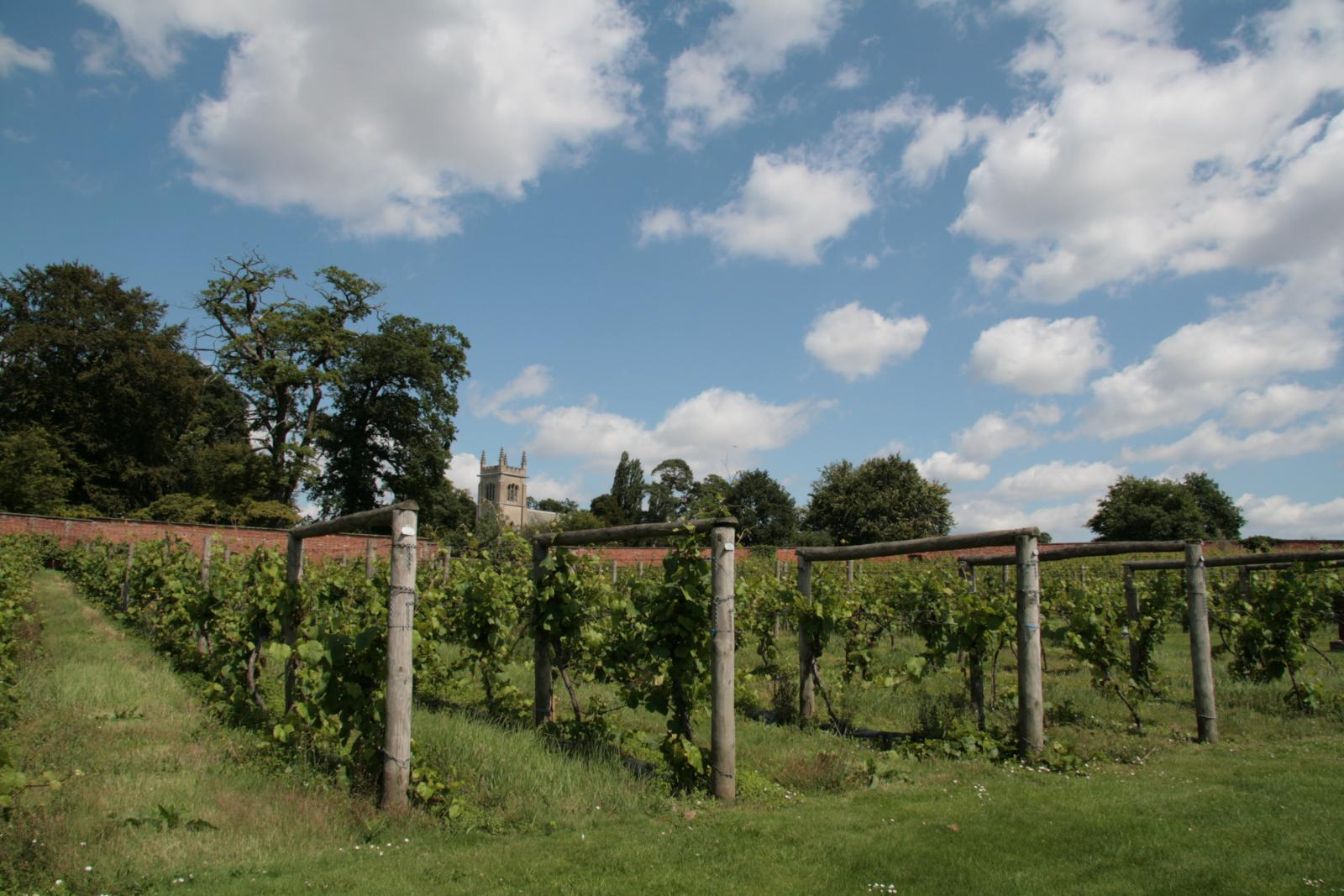 Wine stay in England - England - Wine regions - 1
