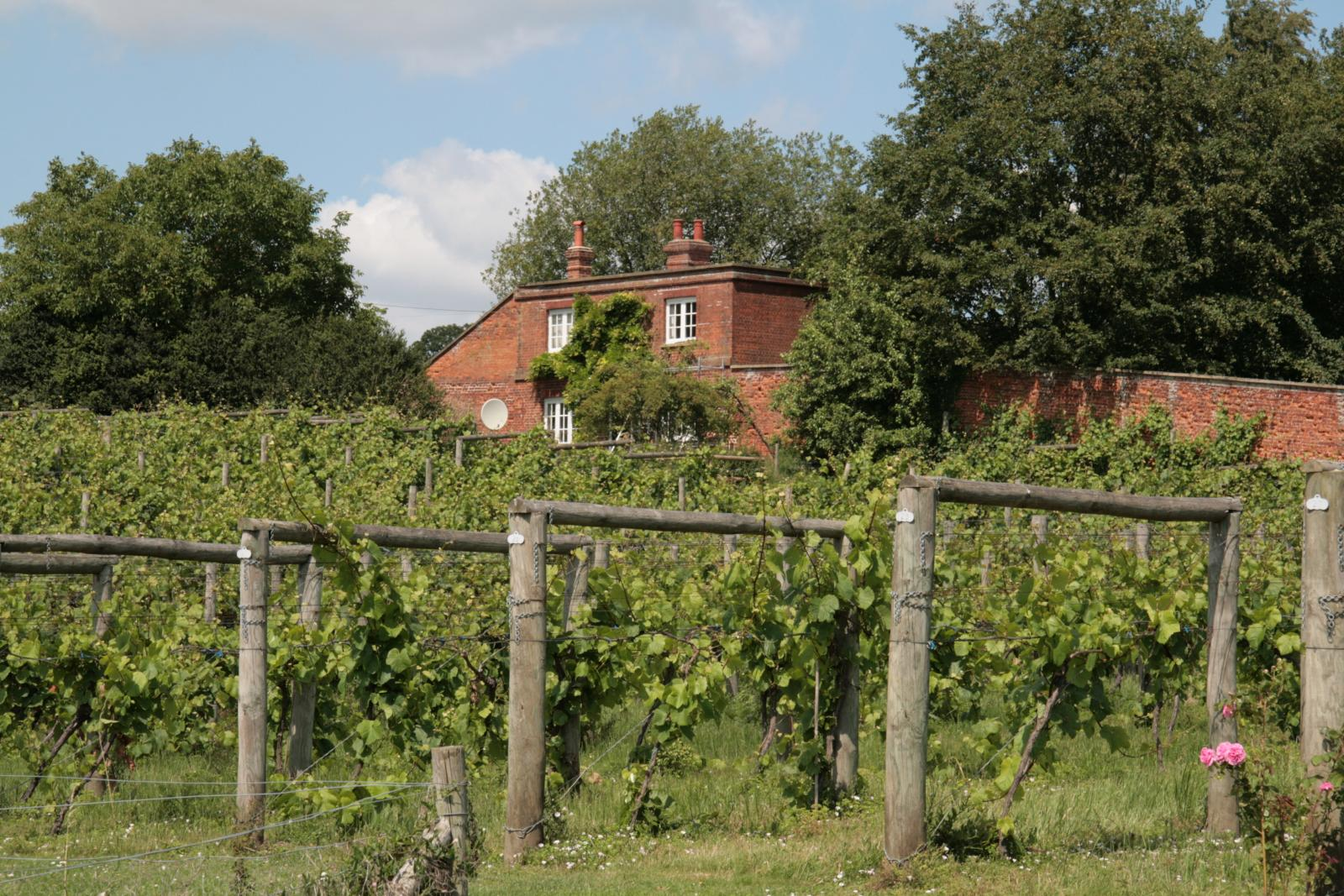 Wine stay in England - England - Wine regions - 2