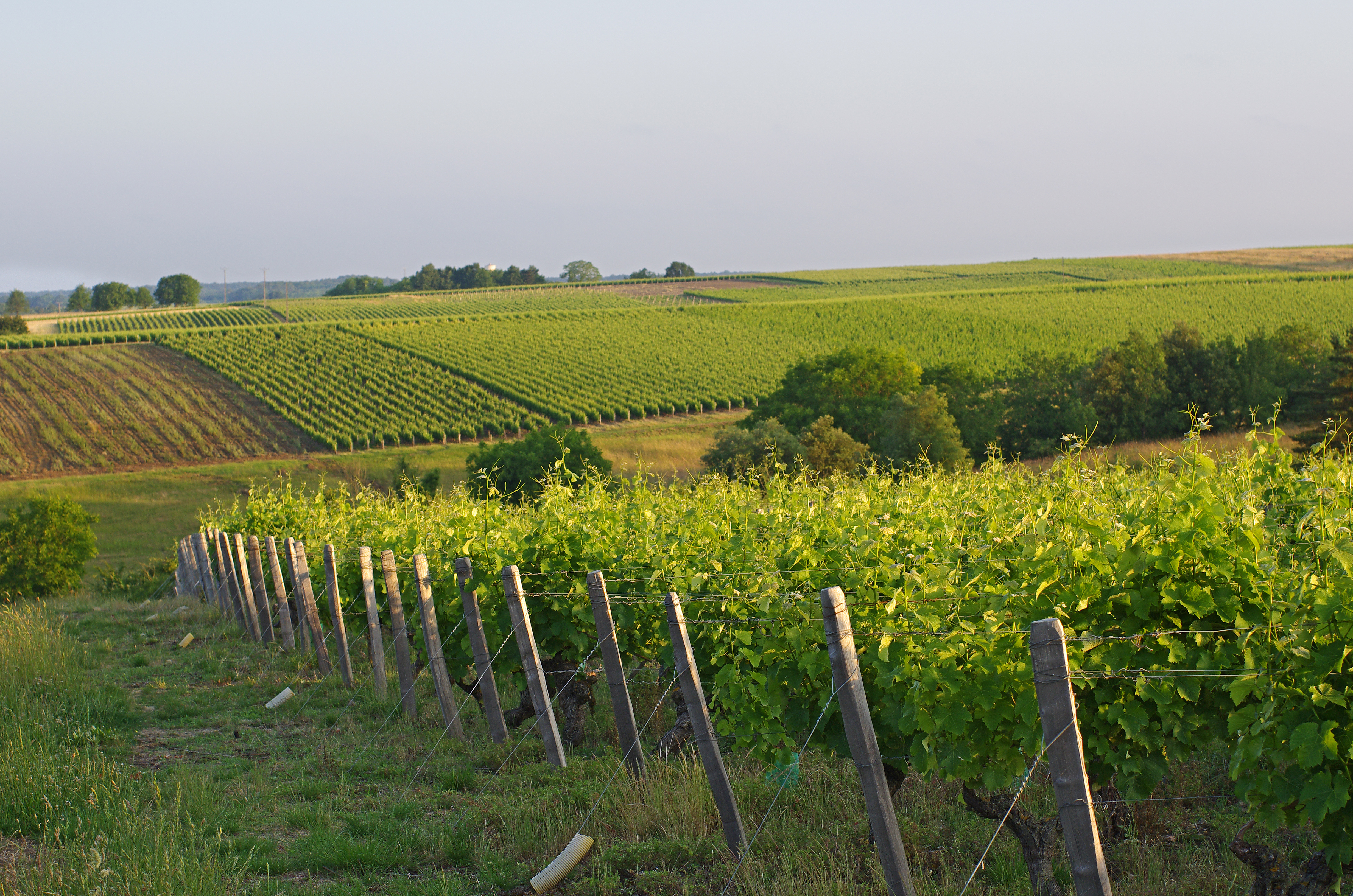 Wine Stay in South-Ouest of France - South-West of France - Wine Region - 2