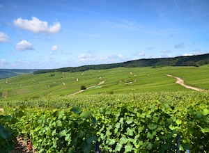 Wine stay in Champagne - Champagne - the Champagne appellation - 1