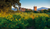 Wine Stay in Roussillon - Roussilon - 6