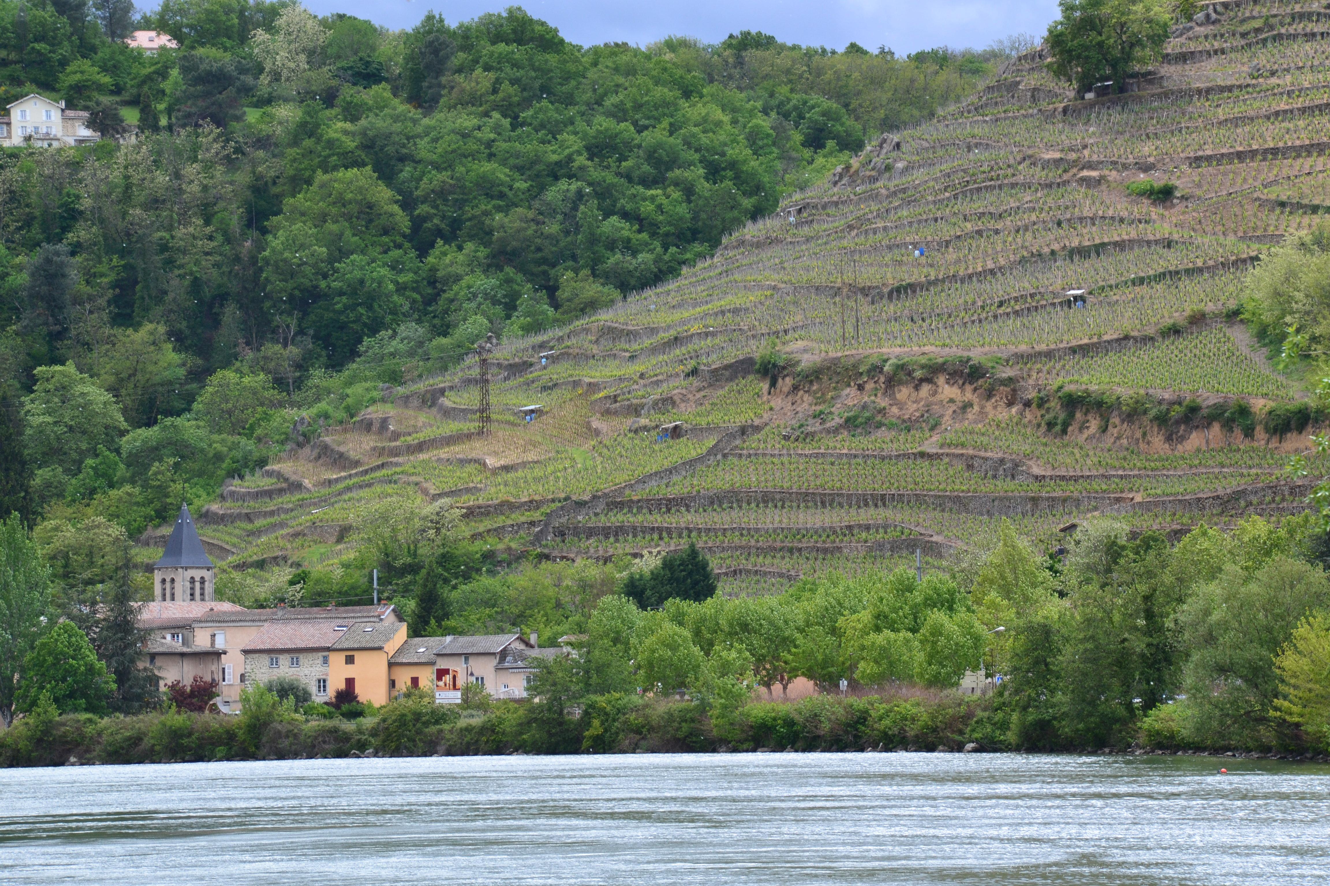 Wine stay in the Rhone valley - Rhone Valley - Wine Region - 1