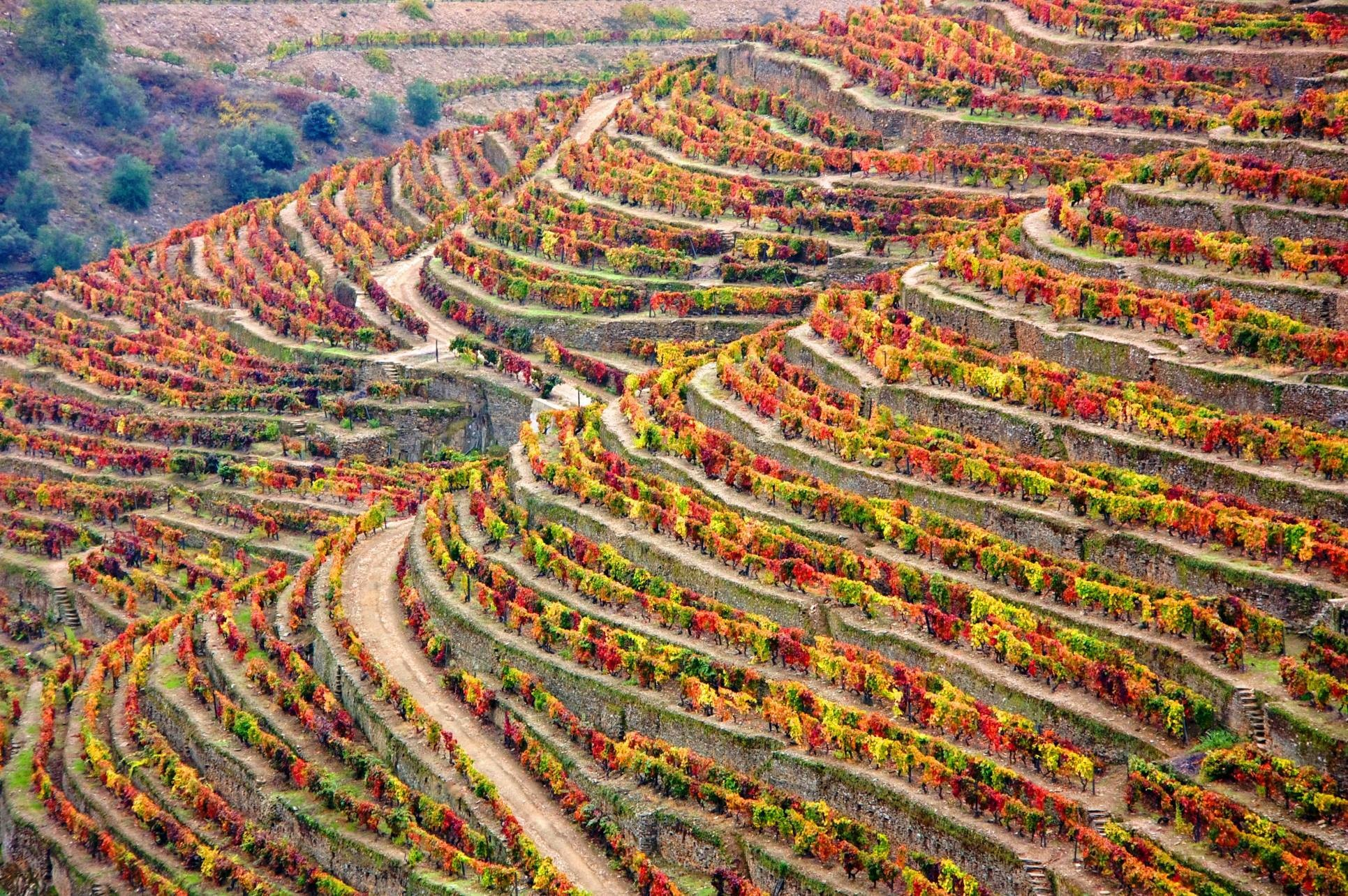 Wine stay in Portugal - Portugal -  - 2