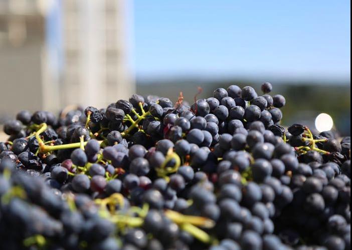 Wine Stay in Loire Valley - Loire Valley - Wine region - 2