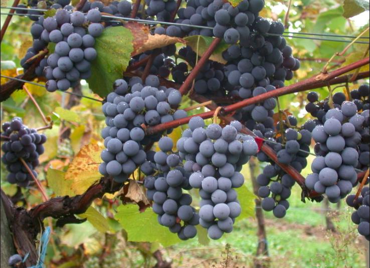 Wine stay in the Beaujolais - Beaujolais - Wines Region - 3