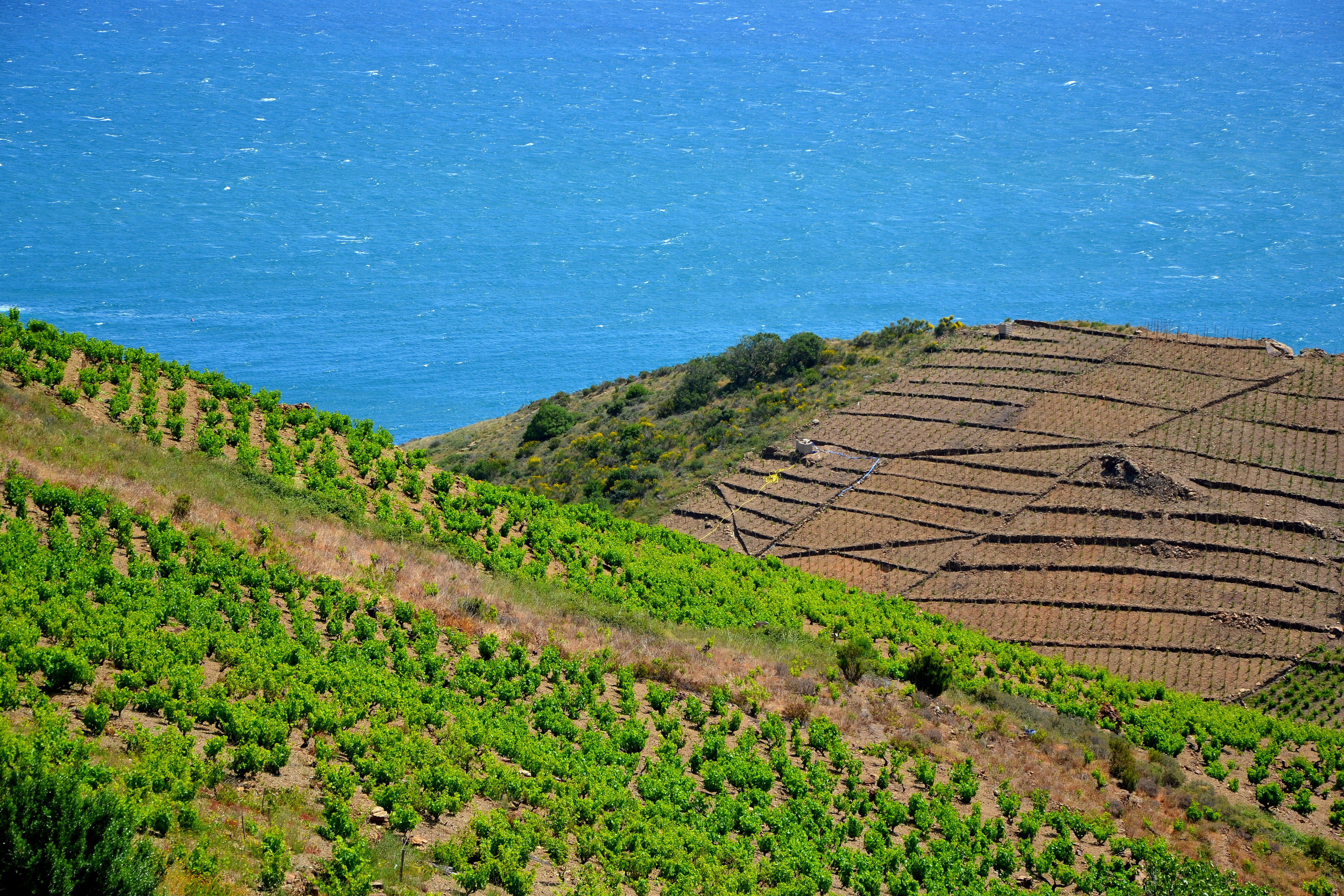 Wine Stay in Roussillon - Roussilon - Wine Region - 1