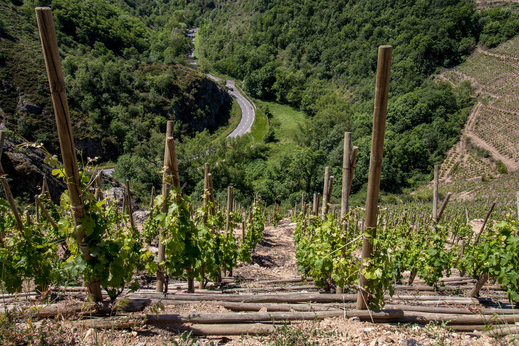 Wine stay in the Rhone valley - Rhone Valley - Wine Region - 2