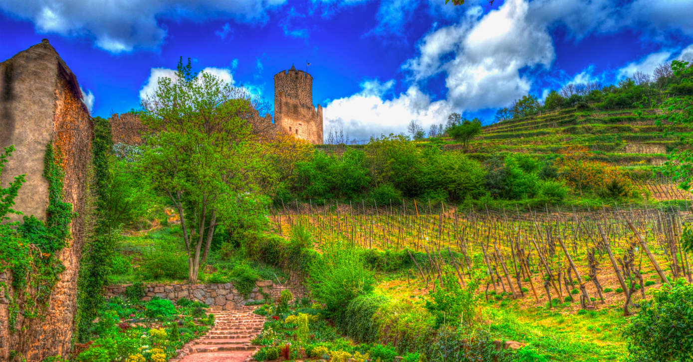 Wine stay in Alsace - Alsace - Alsace - 2