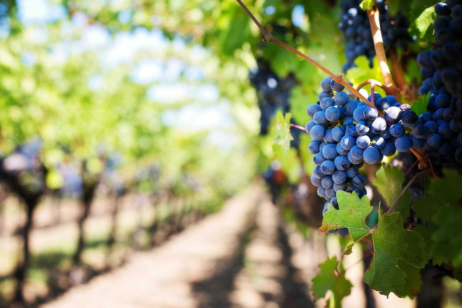 Wine stay in the Rhone valley - Rhone Valley - Wine Region - 3