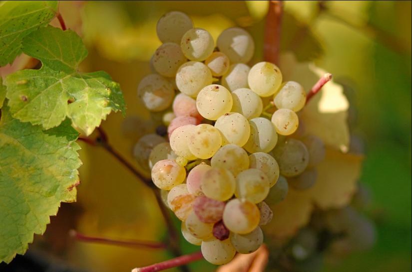 Wine stay in Alsace - Alsace - Wine Regions - 3
