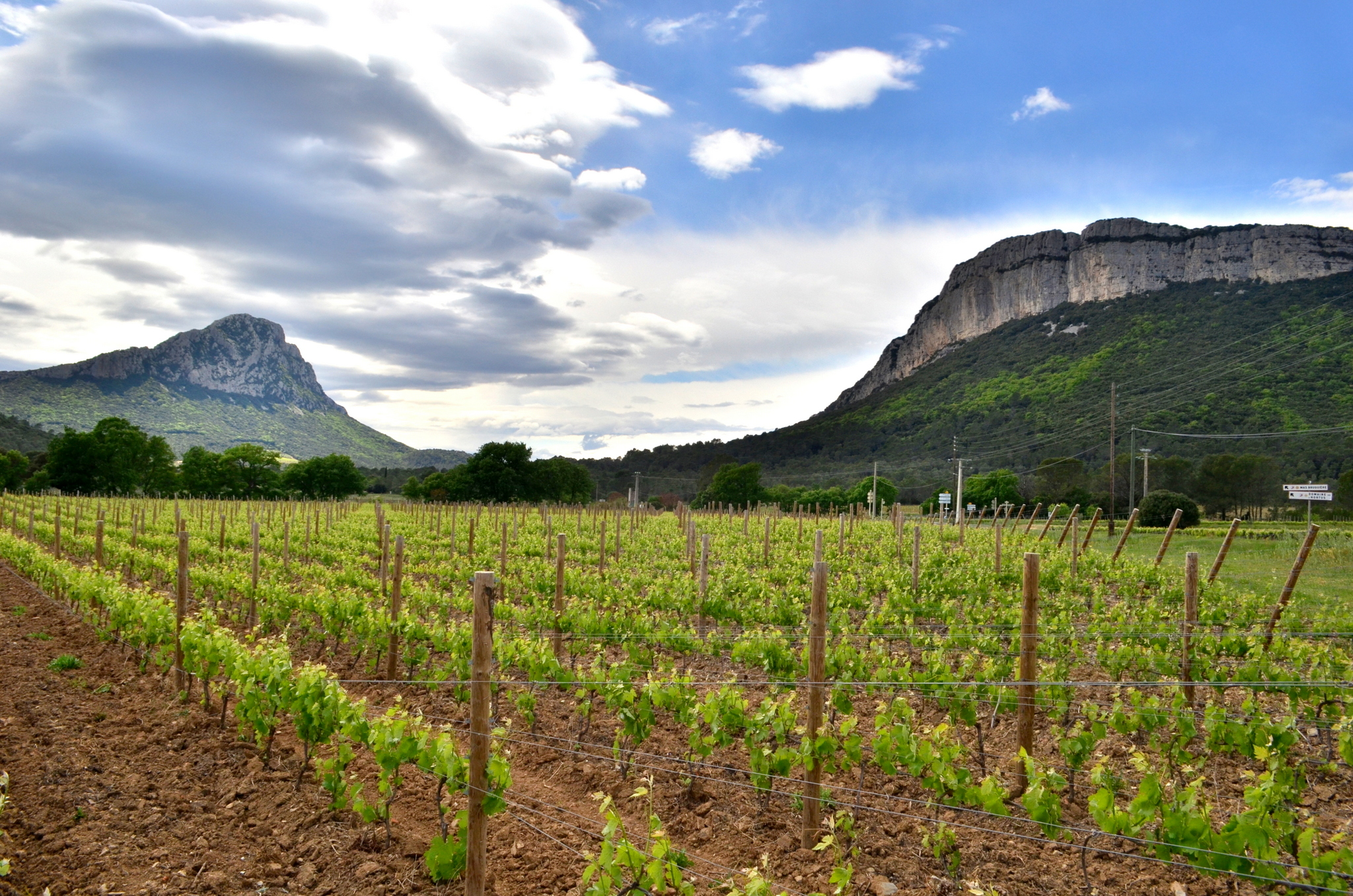 Wine stay in the Languedoc - Languedoc - wine region - 1