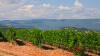 Wine Stay in Roussillon - Roussilon - 4