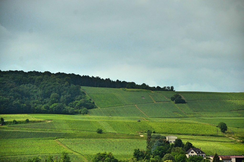 Wine stay in Champagne - Champagne - the Champagne appellation - 2