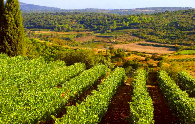Wine stay in the Languedoc - Languedoc - wine region - 2