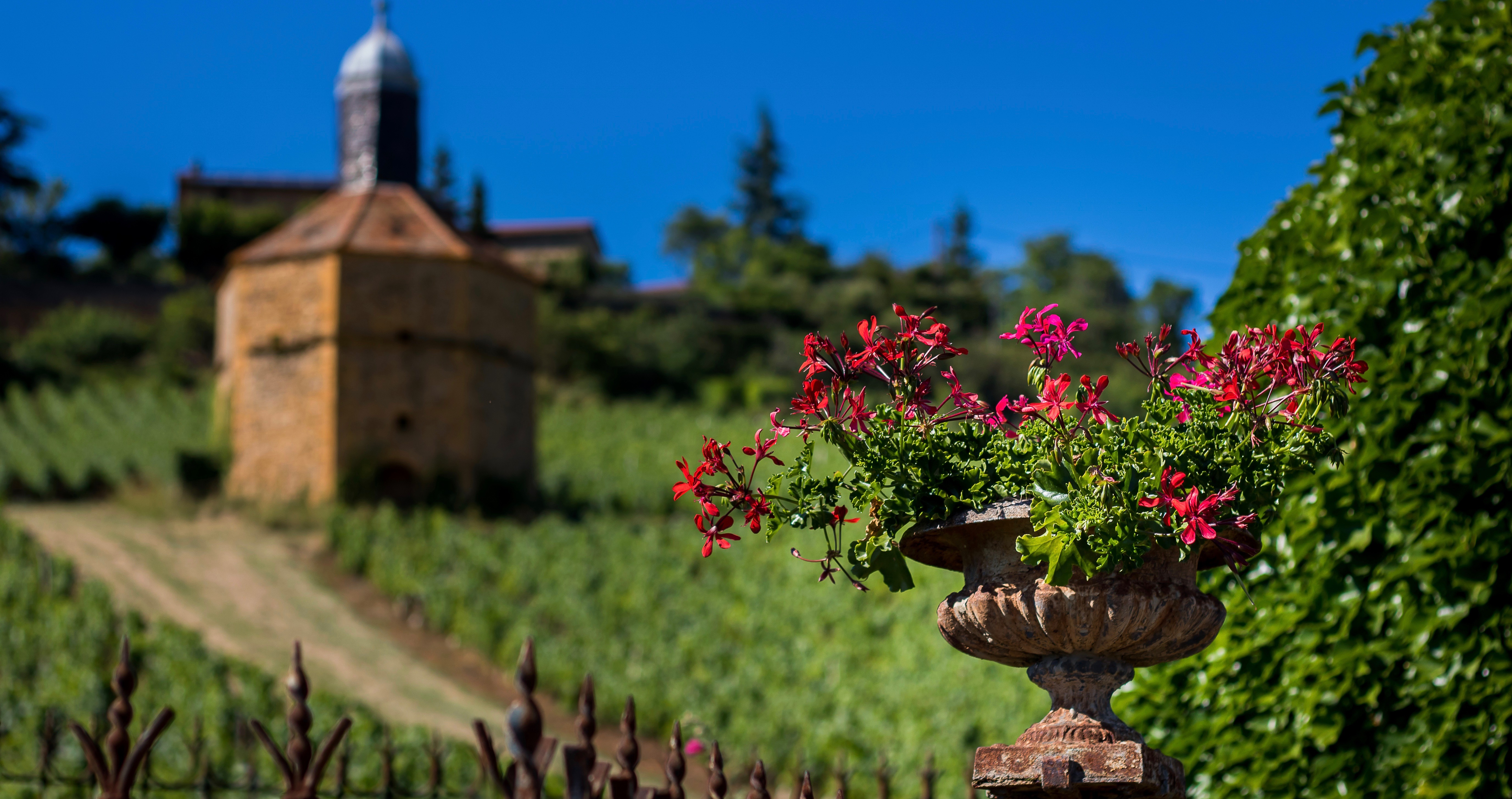 Wine stay in the Beaujolais - Beaujolais - Wines Region - 2