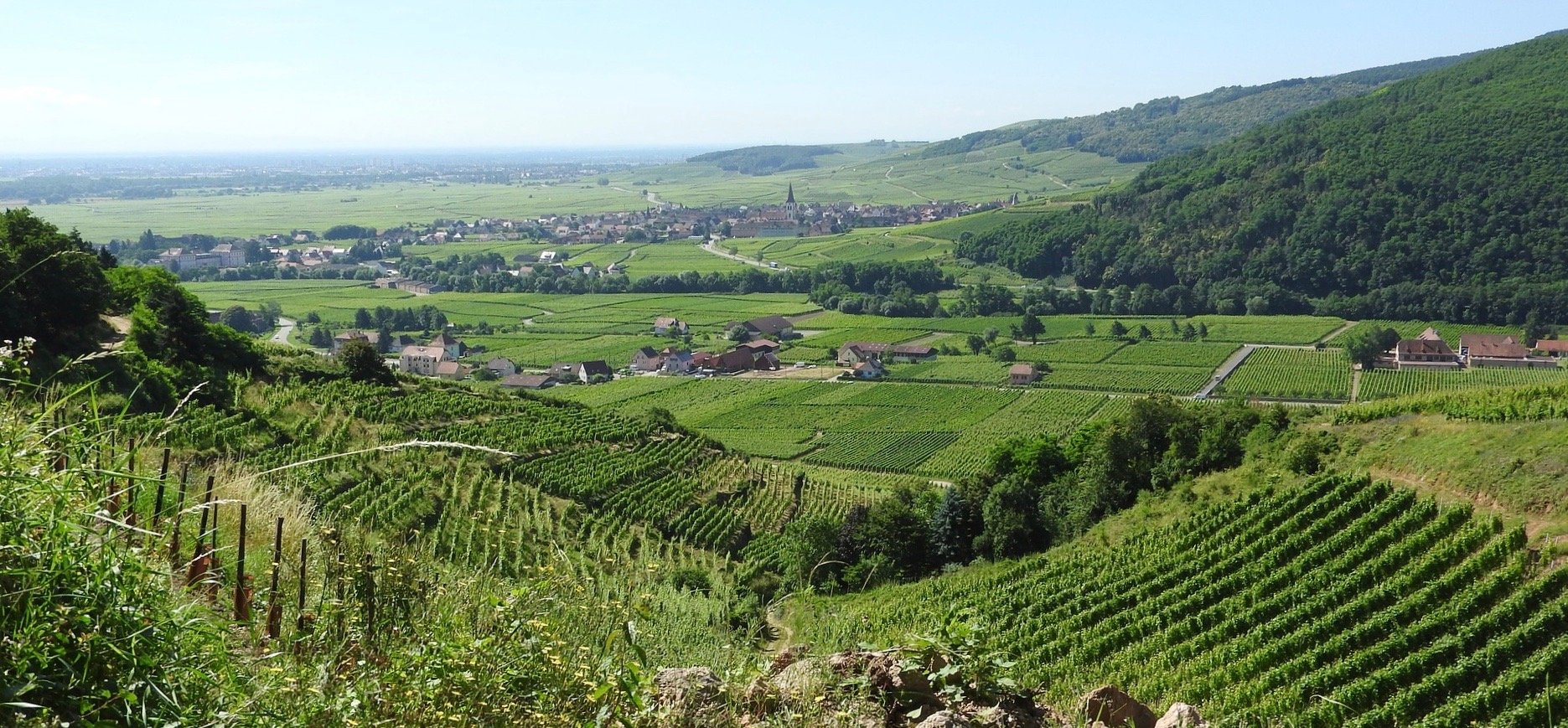 Wine stay in Alsace - Alsace - Wine Regions - 2