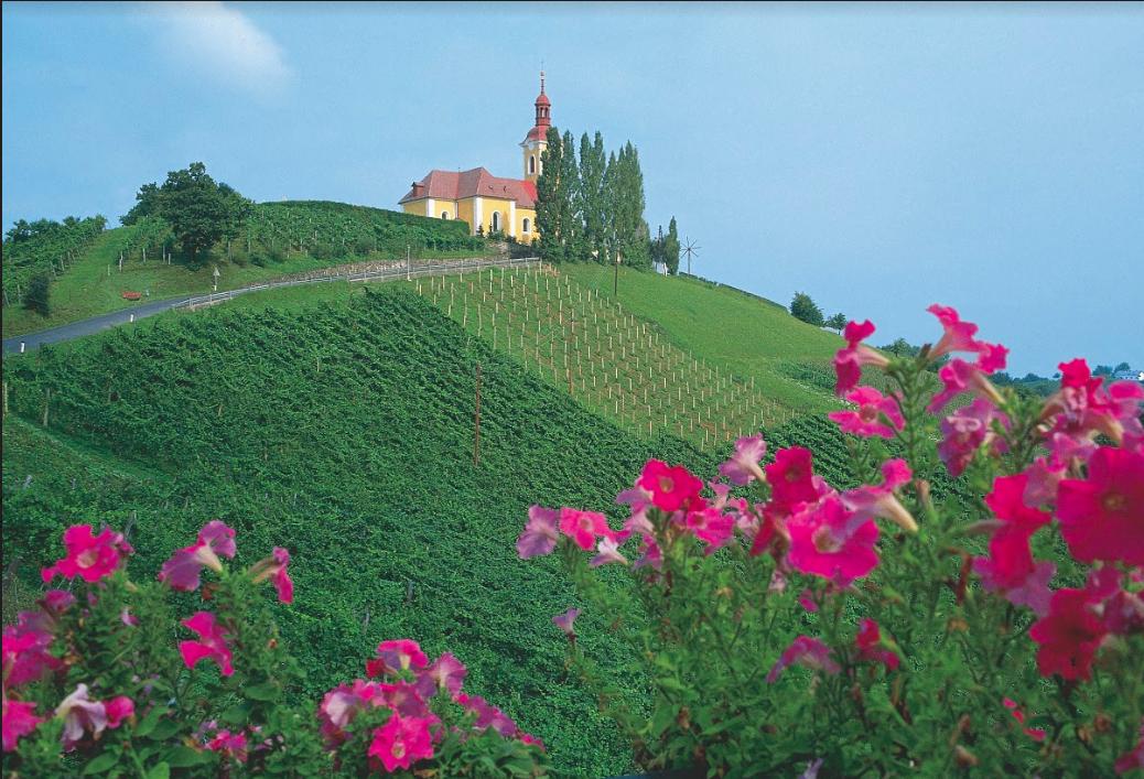 Wine stay in Croatia - Croatia -  - 1