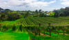 Wine stay in New-Zeleand - New-Zealand - 7