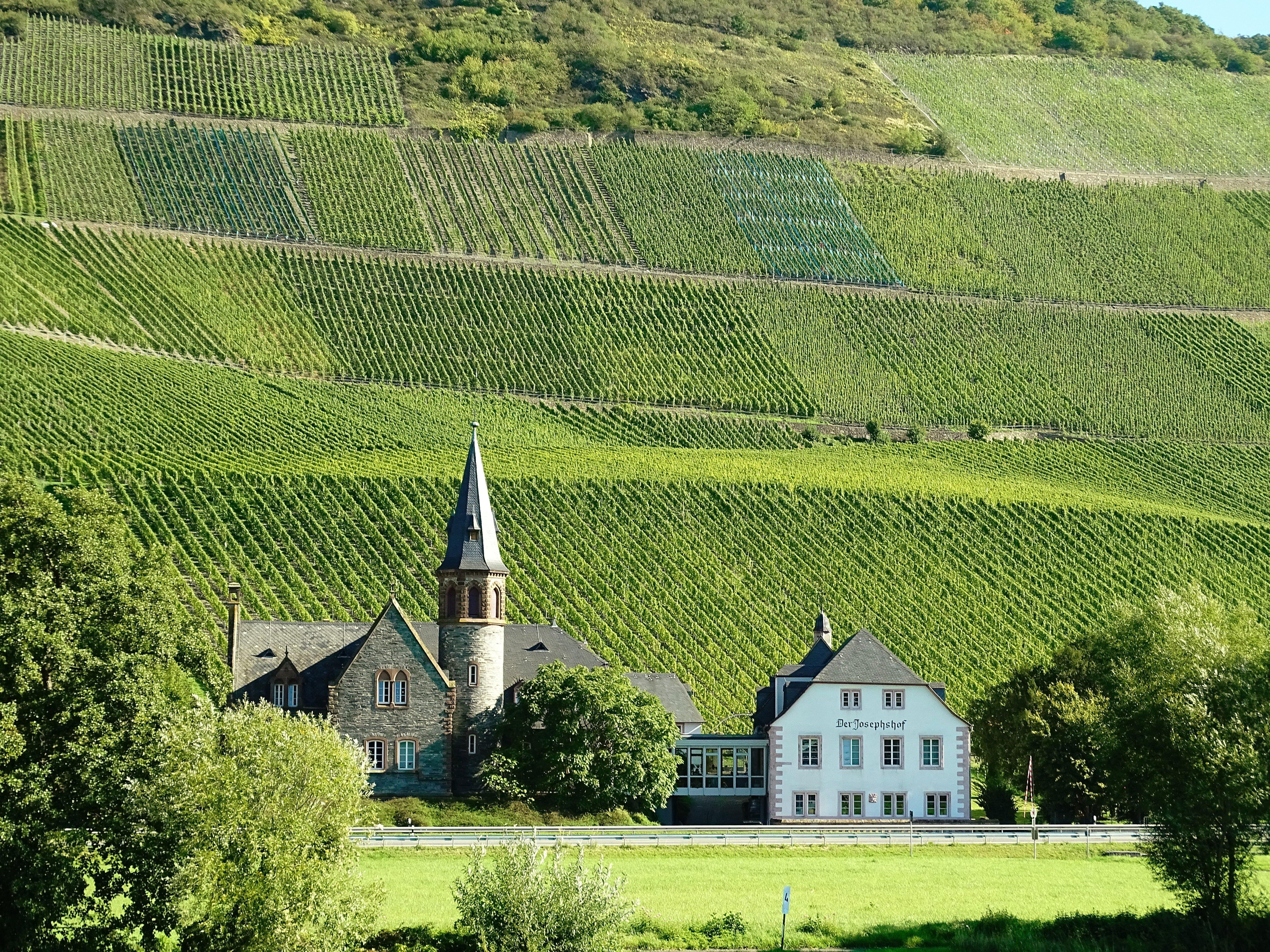 Wine stay in Germany - Germany - Wine regions - 1