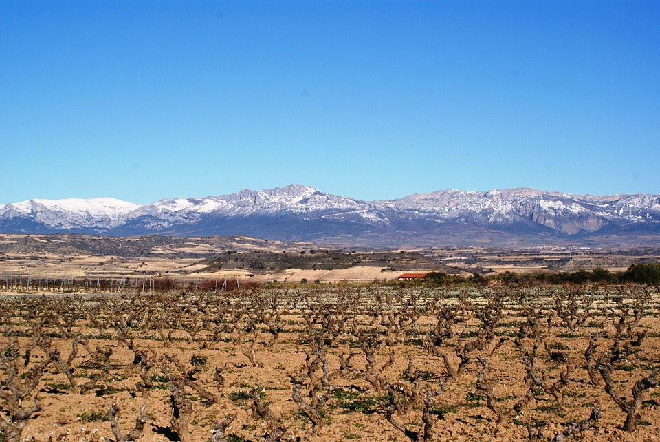 An exceptional stay in Rioja -  - A dinner beyond perfection - 3