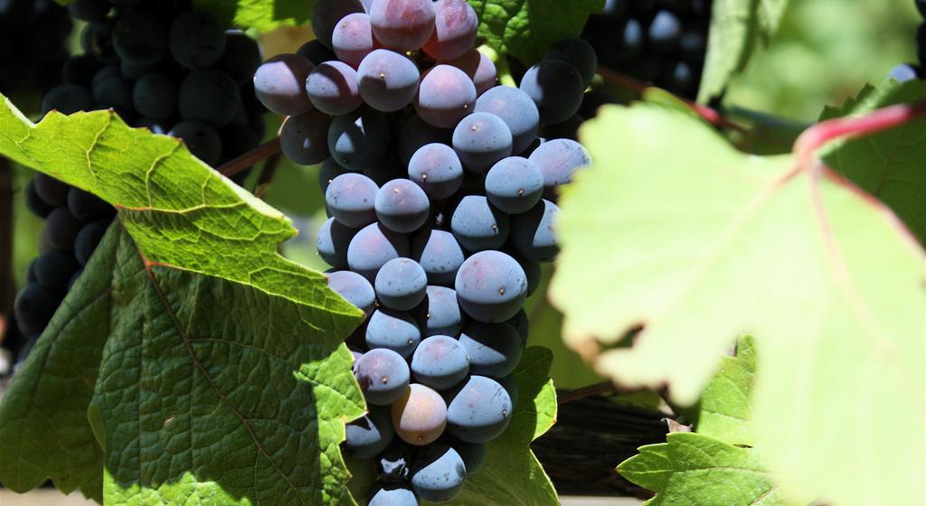À la découverte de la Bourgogne - Bourgogne - Au milieu des vignes… - 2