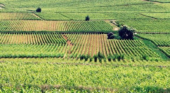 À la découverte de la Bourgogne - Bourgogne - Bienvenue en Bourgogne - 3