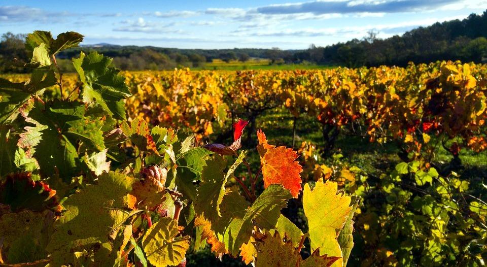 À la découverte du Languedoc - Languedoc - Bienvenue dans le Languedoc ! - 1