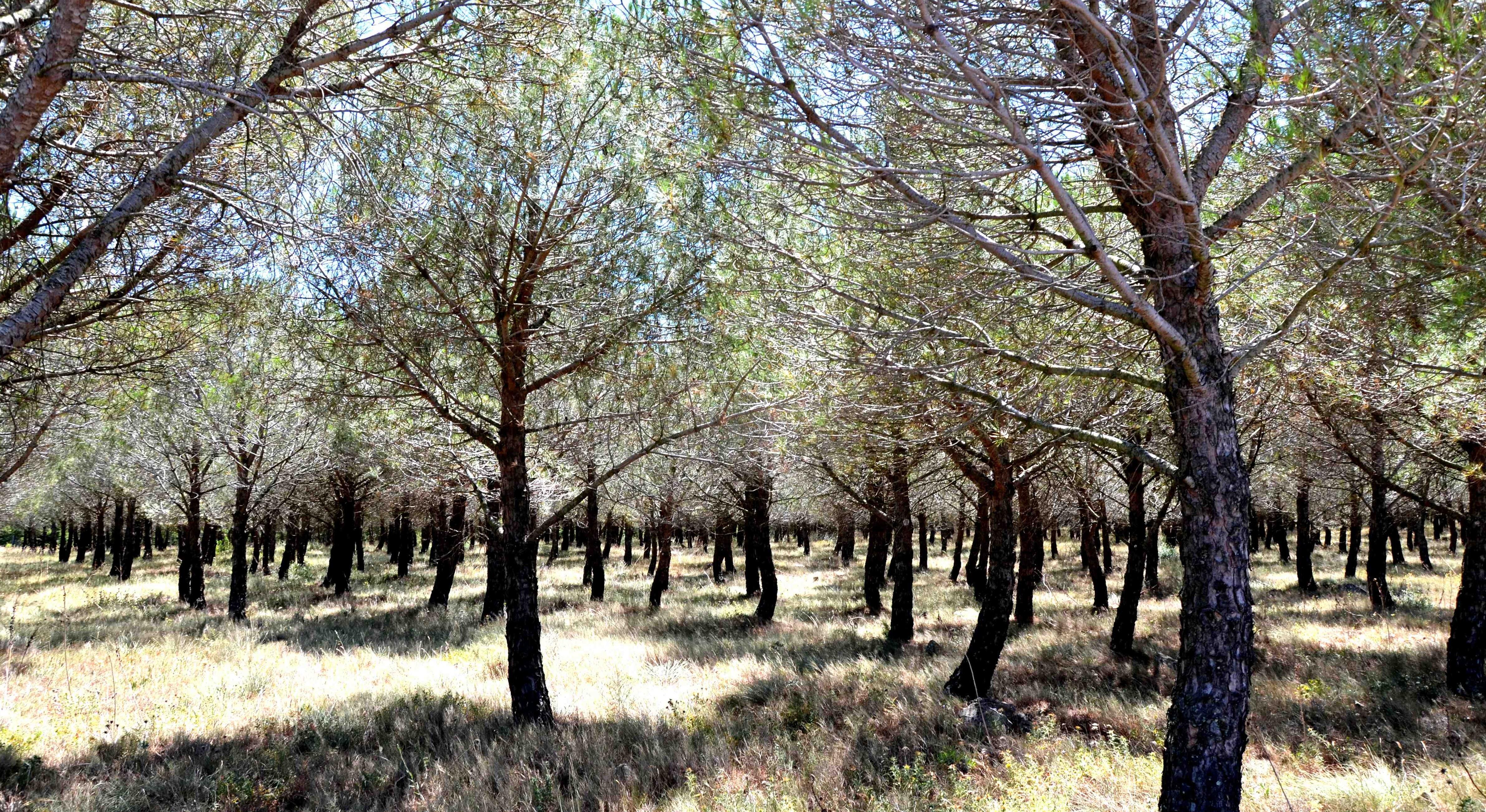 À la découverte du Languedoc - Languedoc - Parfums de garrigue... - 2