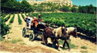 Dans l'intimité des vendanges espagnoles - La Ribera del Duero - Au temps des vendanges ! - 3