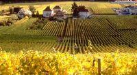 Bien être à l'Alsacienne - Alsace - Ribeauvillé, une ville dédiée au vin - 3