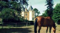 Élégance et finesse au pays des Graves - Bordeaux - Un havre de paix aux portes de Bordeaux - 2