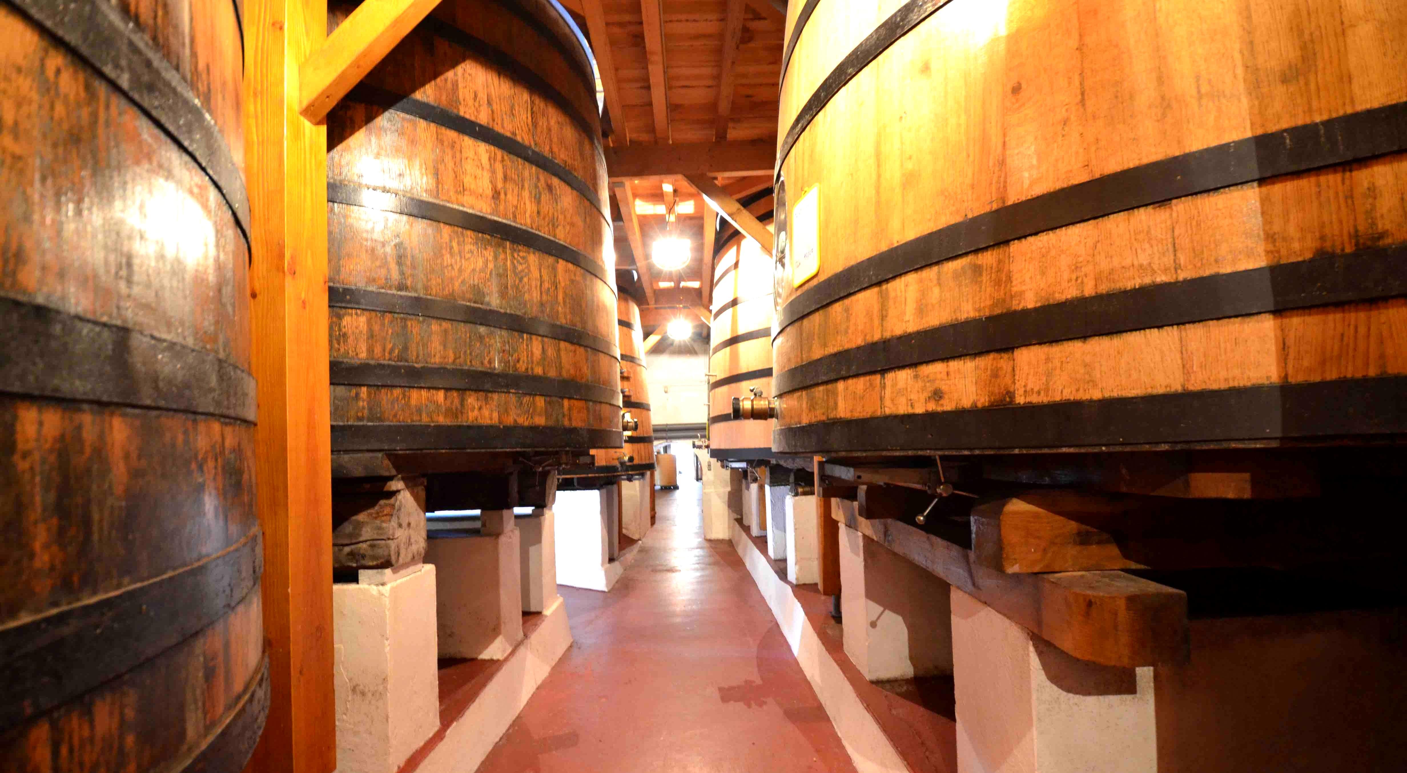 Petite escapade oenologique dans le Médoc - Bordeaux - BALADES EN TERROIR MÉDOCAIN - 2