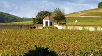 La Bourgogne avec vue sur les vignes - Bourgogne - Au beau milieu des vignes... - 3