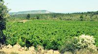 Les Corbières, conviviales et authentiques - Languedoc - Balades aux couleurs du Sud - 1