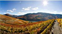 Dans les coulisses des vendanges du Porto - Vallée du Douro - Direction la Vallée... - 1
