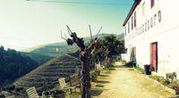 Escapade dans les vignes de Porto - Vallée du Douro - En route pour la Vallée - 1