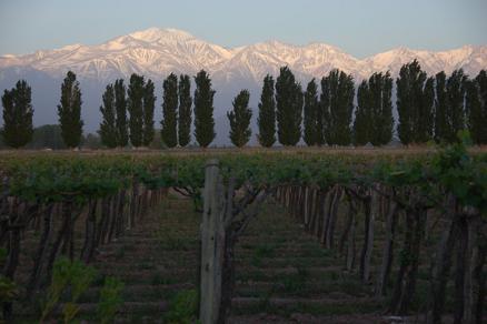 SÉJOUR OENOLOGIQUE ET CULTUREL EN ARGENTINE - Argentine - Mendoza, une des capitales mondiales du vin - 2