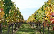 SÉJOUR OENOLOGIQUE ET CULTUREL A BORDEAUX - Bordeaux - Pause au coeur des vignes - 2