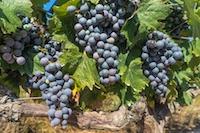 SÉJOUR OENOLOGIQUE ET CULTUREL A BORDEAUX - Bordeaux - Pause au coeur des vignes - 1